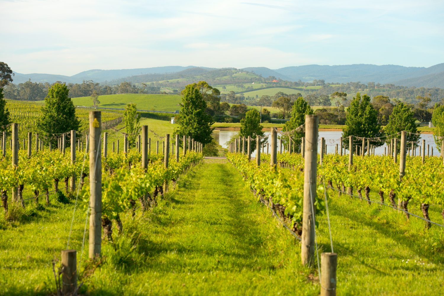 Yarra Valley wines