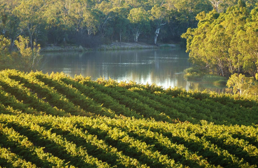 Riverland wineries